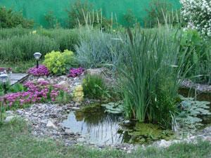 Декоративные водоемы на садовом участке