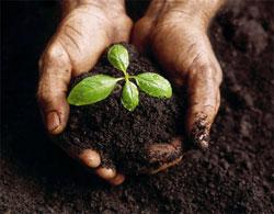 Удобрения — микроудобрения, комплексные и органические удобрения, внесение удобрений, азотные удобрения
