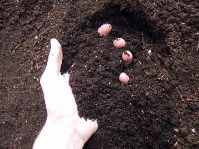 Как определить состав почвы на садовом участке