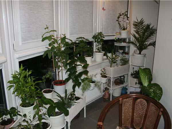 Домашние растения в интерьере