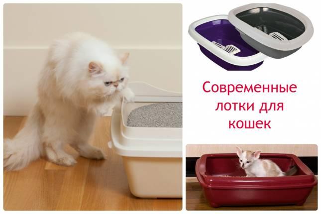 Как приучить котенка пользоваться лотком
