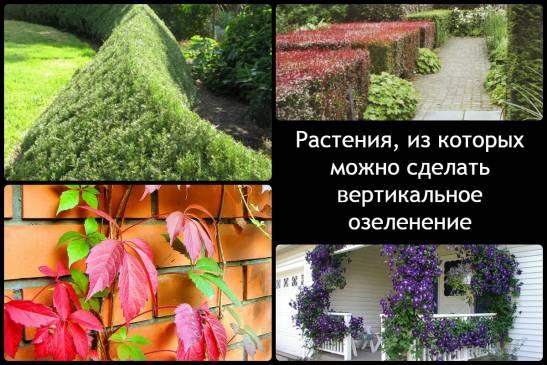 Вертикальное озеленение своими руками за 5 простых шагов