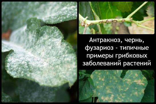 Болезни комнатных растений и методы борьбы с ними. Часть 1