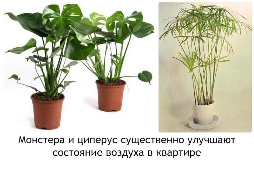 всего, фото вредных комнатных растений с названиями мало