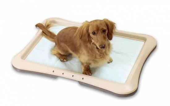 Рекомендации по приучению щенка к туалету