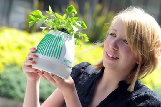 Как выбрать комнатные растения в свою квартиру