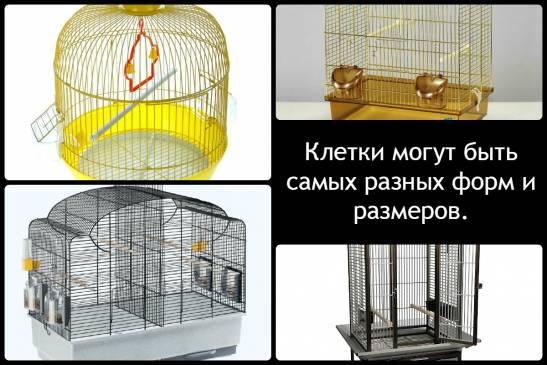 Домашние попугайчики: уход и содержание
