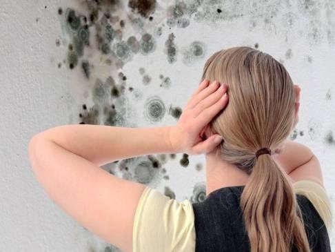 Плесень на стене: как избавиться