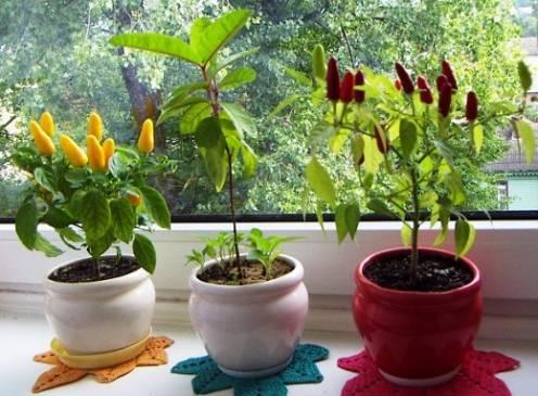 Какие растения можно выращивать зимой на подоконнике?