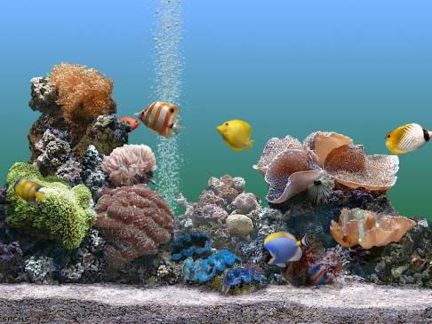 Советы по уходу за домашним аквариумом