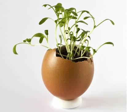 Рекомендации по выращиванию огуречной рассады в скорлупе