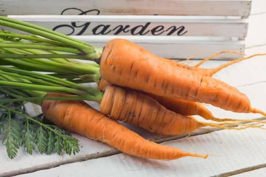 Успешная зимовка овощей: как хранить морковь