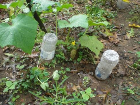 Экономное орошение участка: капельный полив из пластиковых бутылок