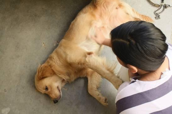 Как помочь питомцу: эпилепсия у собак