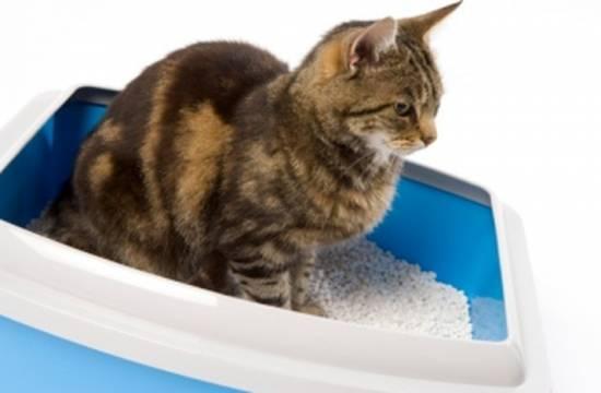 Следим за здоровьем питомца: симптомы и лечение мочекаменной болезни у кошек