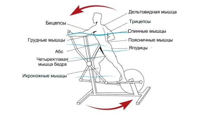 нужно на какие мышцы влияет велотренажер картинки предназначаются