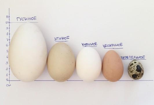 Сварить яйцо в микроволновке в стакане