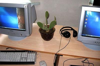 Компьютер и кактус