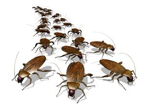 Как избавиться от тараканов и крыс дома и в подъезде