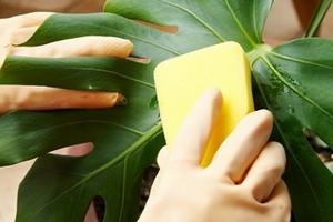 Уход за комнатными растениями в отопительный период