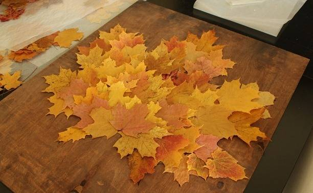 Мастер-класс по созданию картины из кленовых листьев. Шаг 2