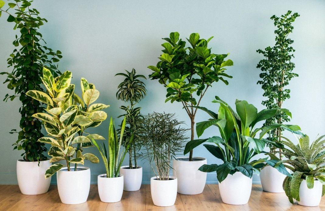 Картинки по запросу Растения для офиса - зелёная отделка