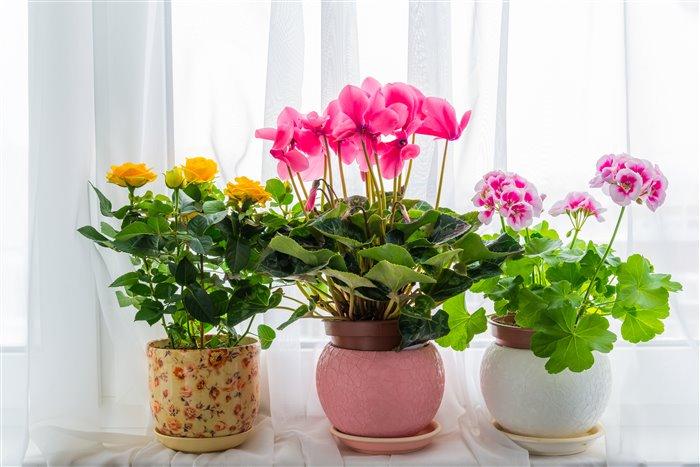 Как красиво разместить цветы на подоконнике