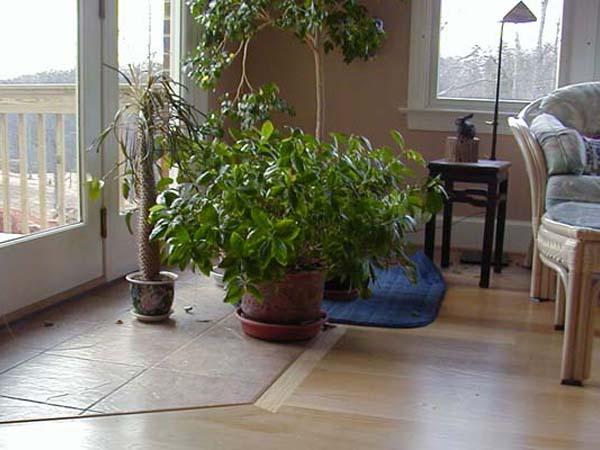 Комнатные растения у выхода на балкон