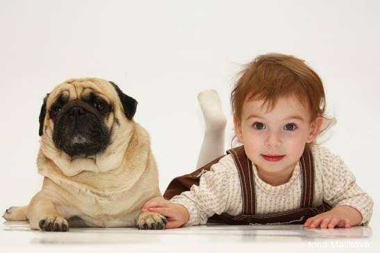 Лучшие породы собак для семей с детьми