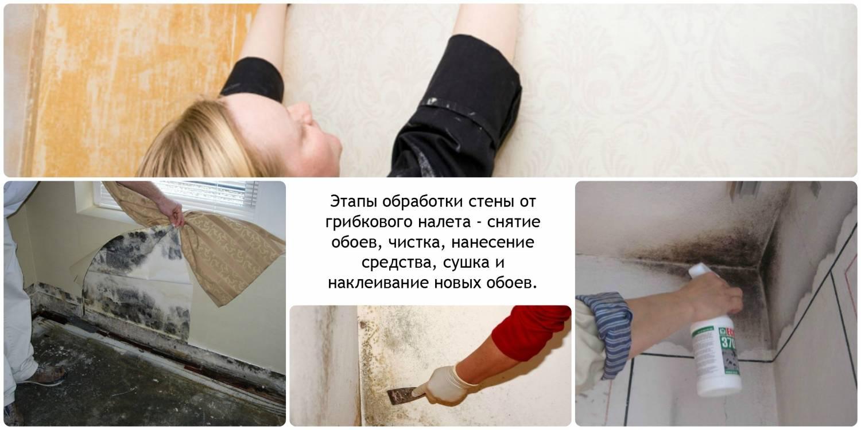 Как вывести плесень со стен в доме: пошаговая инструкция