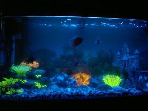 Освещение аквариума своими руками: подбор ламп и расчет 81