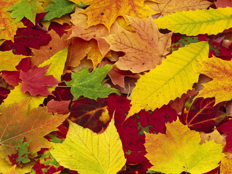 красивые осенние листья фото