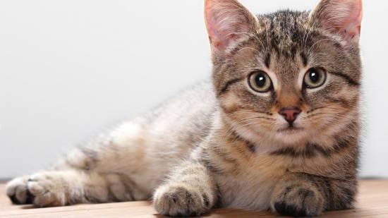 Стерилизация кошек в барнауле цена - e
