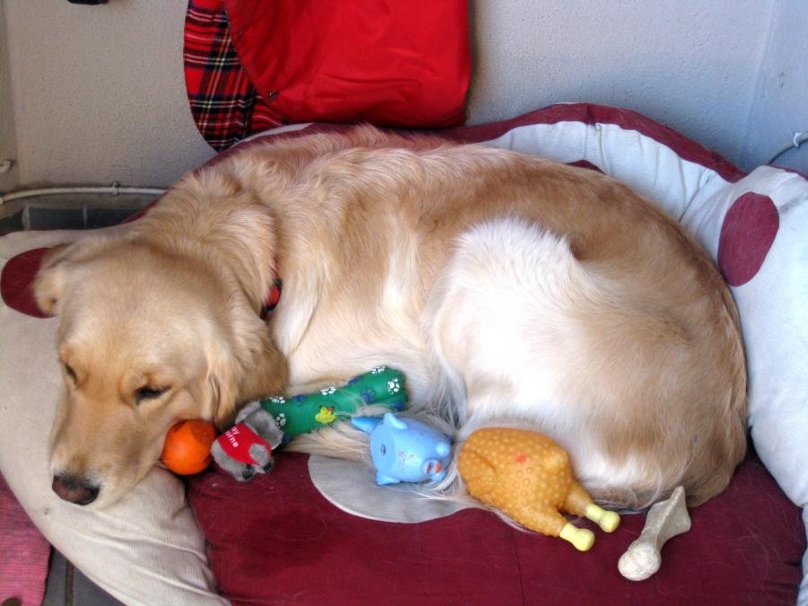 Что делать если у собаки произошла нежелательная вязка