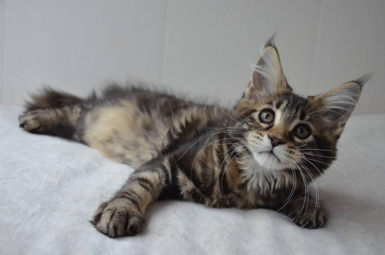 Сношение с котом 6 фотография