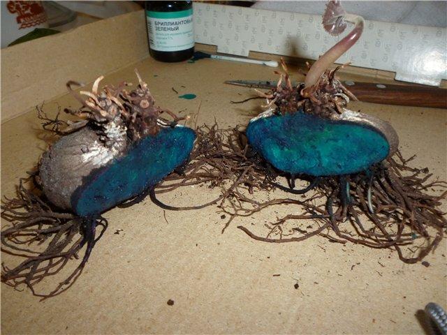 Размножение каллы семенами в домашних условиях