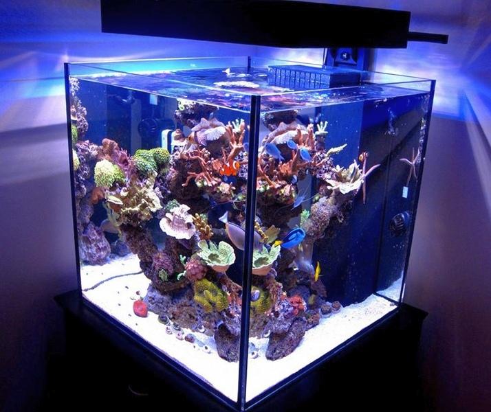 Светодиодное освещение в аквариуме