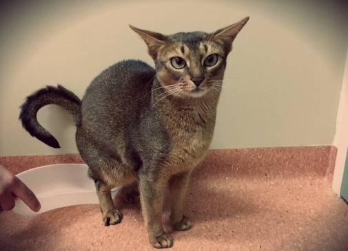 Ципровет таблетки отзывы лечить цистит у кота