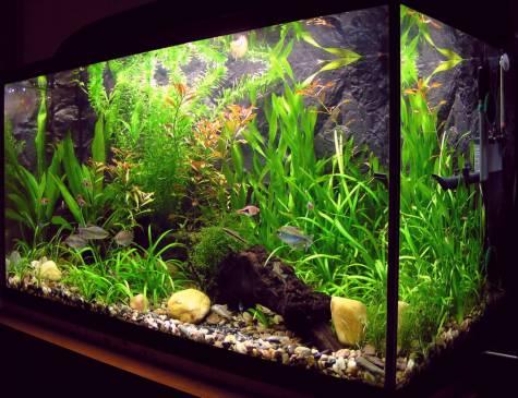 Фильтр внешний аквариум своими руками