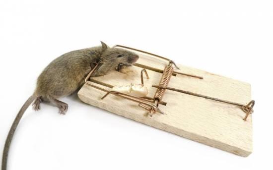 действие ультразвукового отпугивателя мышей