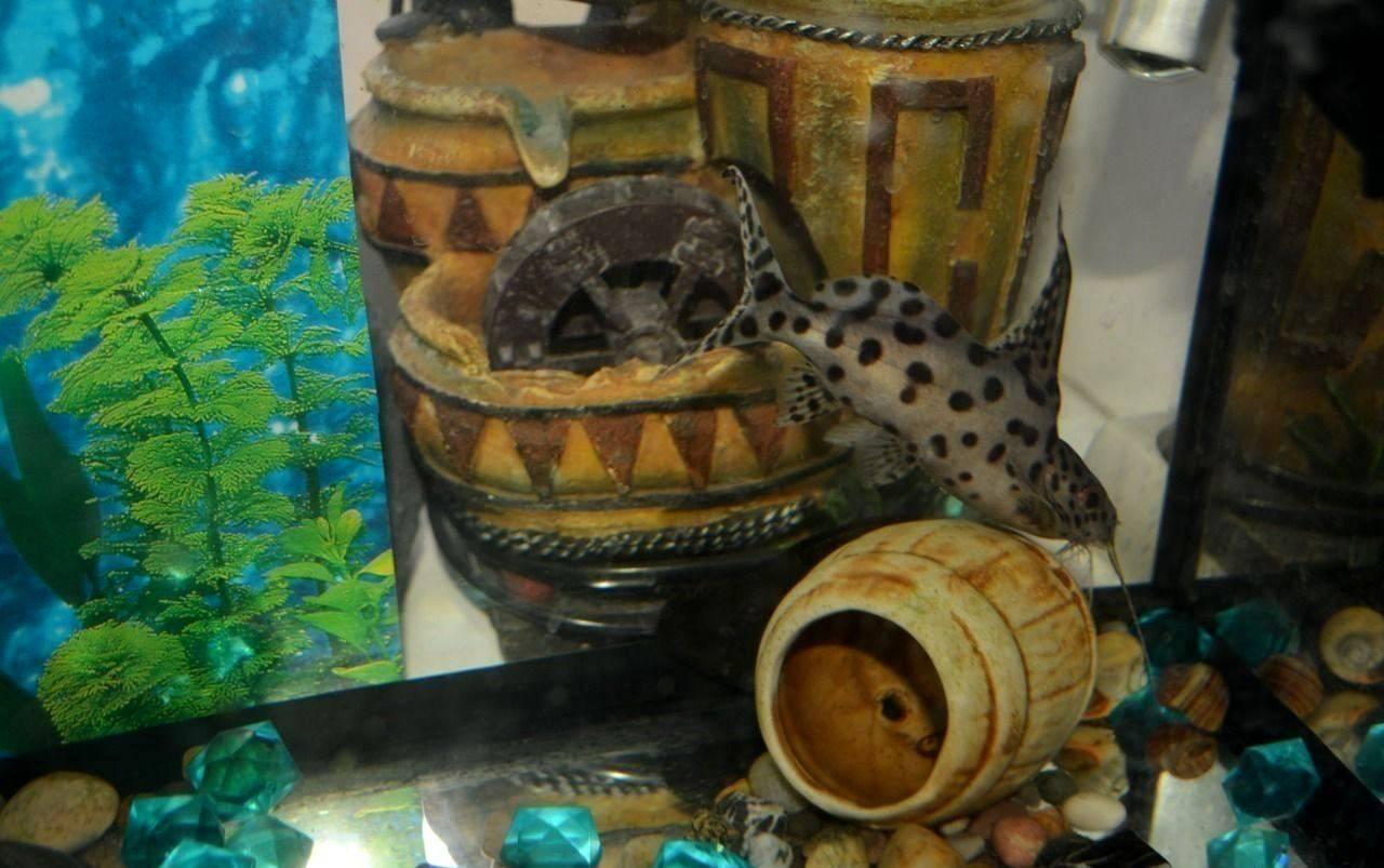 Укрытие для сомов в аквариуме своими руками 35