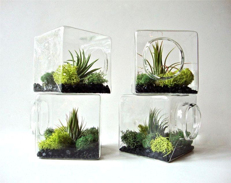 квадратные флорариумы