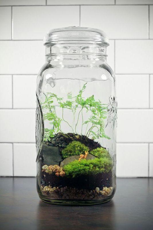 флорариум в банке