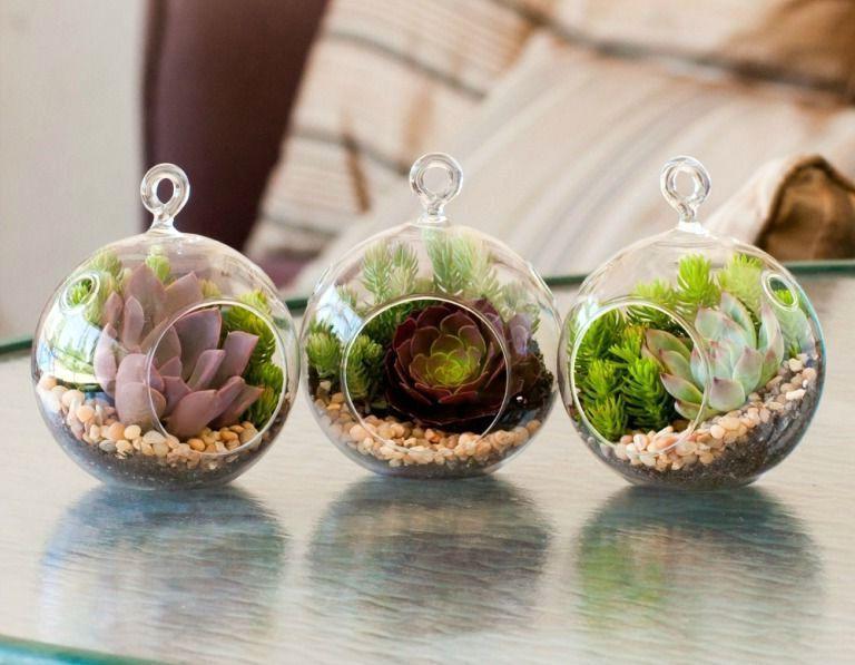 флорариум в круглых подвесных шарах
