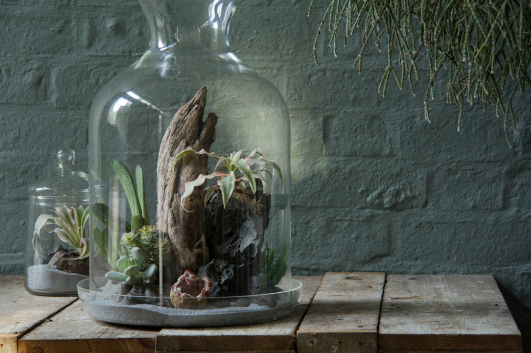 флорариум с корягой