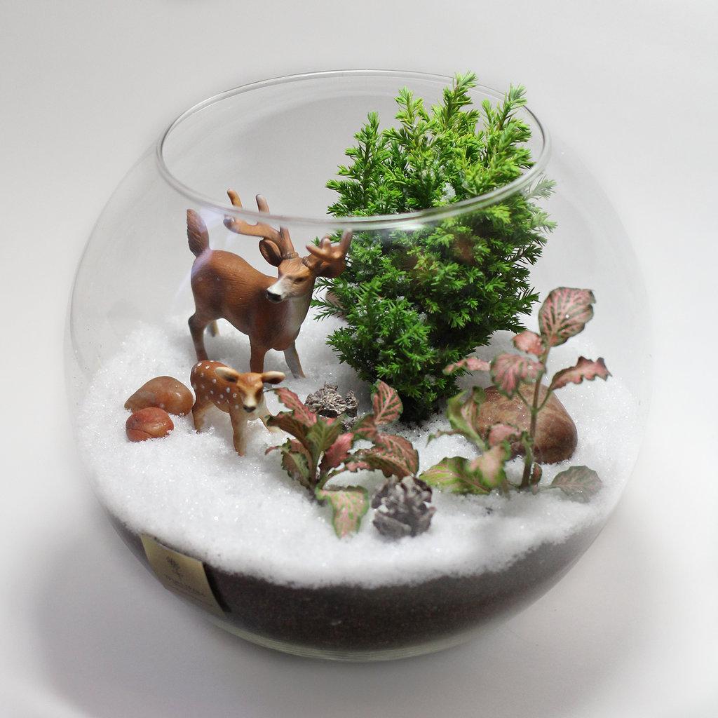 флорариум в зимнем стиле