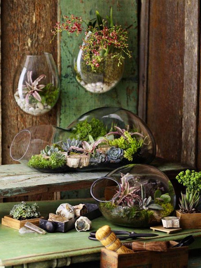 коллекция флорариумов