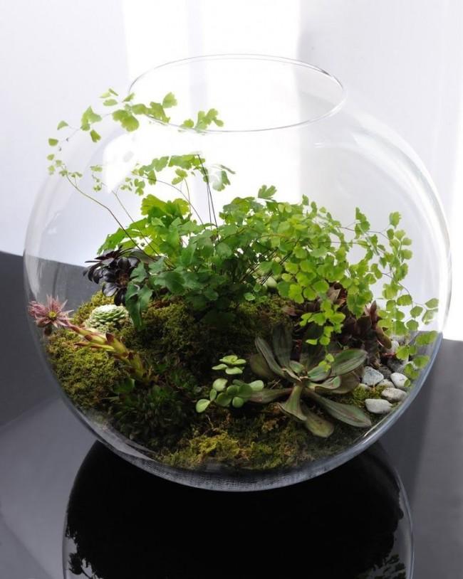 флорариум лес
