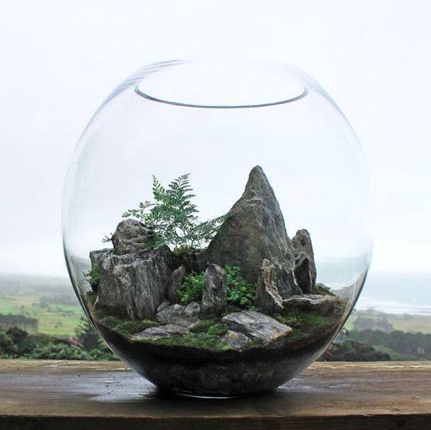 флорариум горные вершины
