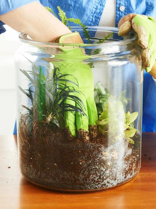 растения в банке